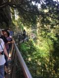 Capilano cliff walk