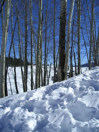 Pinetop_snow_jan_2008_002_2