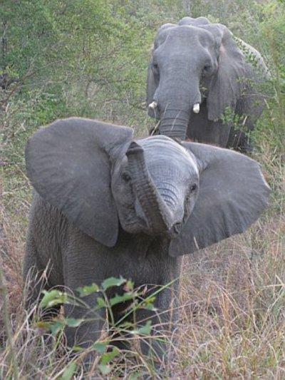 Baby_elephant_3