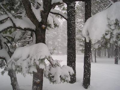 Mar_2006_ian_bday_in_pinetop_007_1