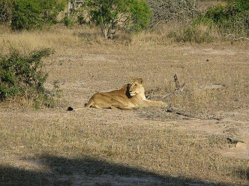 Sabi Sabi Private Game  Reserve --  Within Kruger National Parks, South Africa