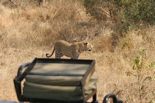 Londolozi Game Park  -- Near Johannesburg, South Africa
