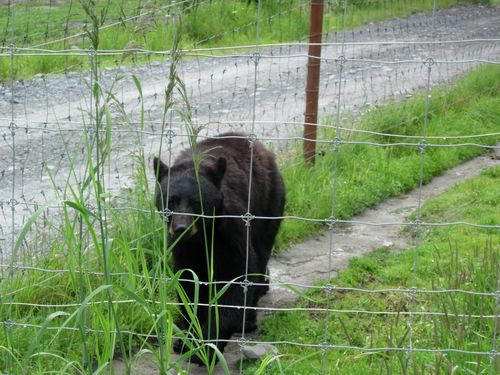 Alaska Wildlife Conservation Center -- Girdwood, Alaska