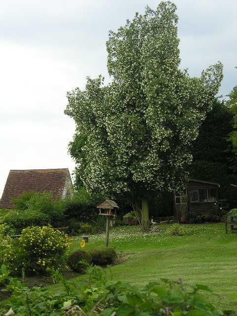 Garden near Holy Trinity Church -- Cuckfield, England
