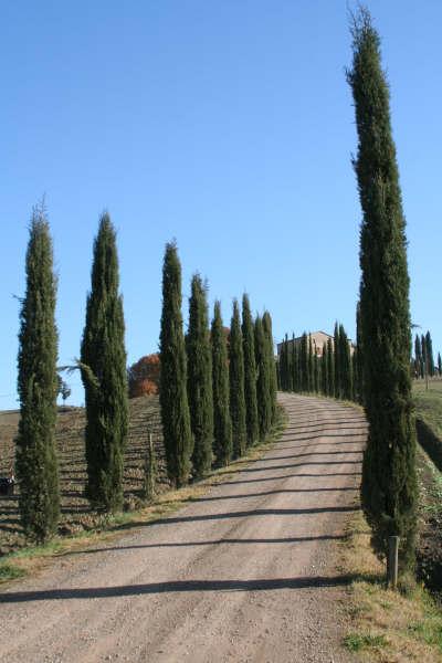 Tuscany region --Italy