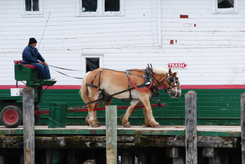 Horse drawn drays