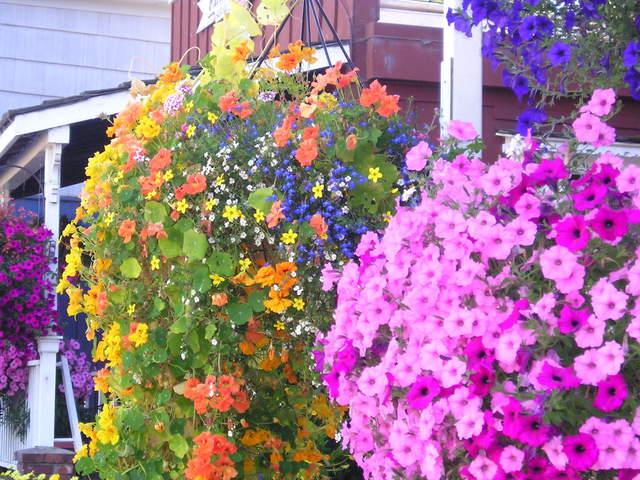 Flowers in bloom -- Nehalem, Oregon