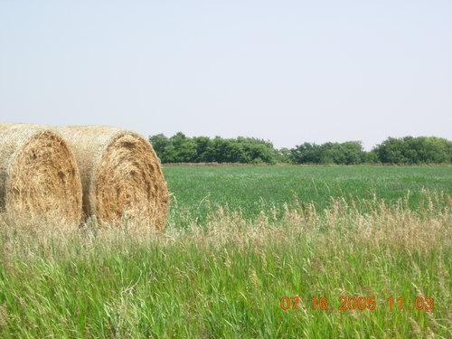 Hay field -- Omaha, Nebraska