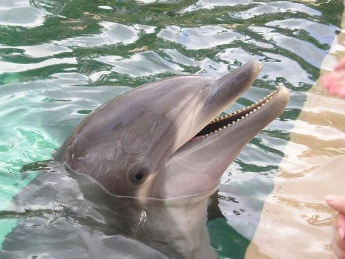 Dolphin at Sea World -- Orlando, Florida