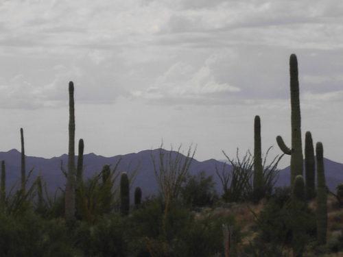 Arizona Sonora Desert Museum -- Tucson, Arizona